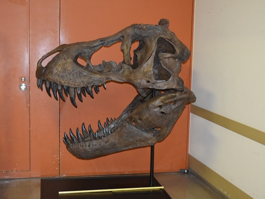 ティラノサウルス 頭骨レプリカ(白亜紀/アメリカ