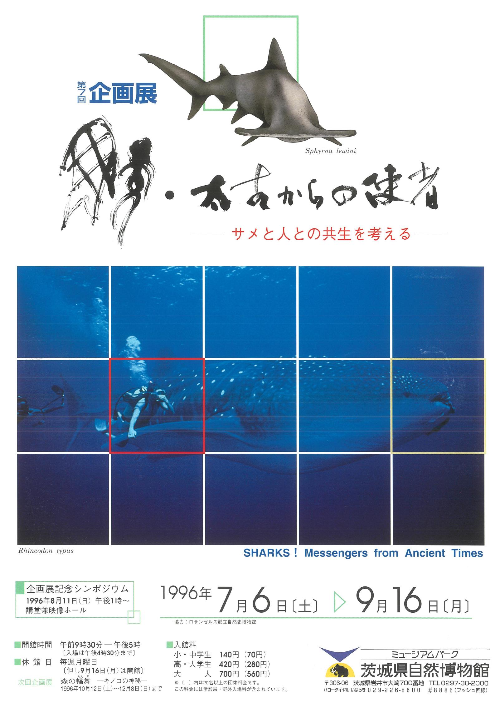 鮫・太古からの使者 -サメと人との共生を考える