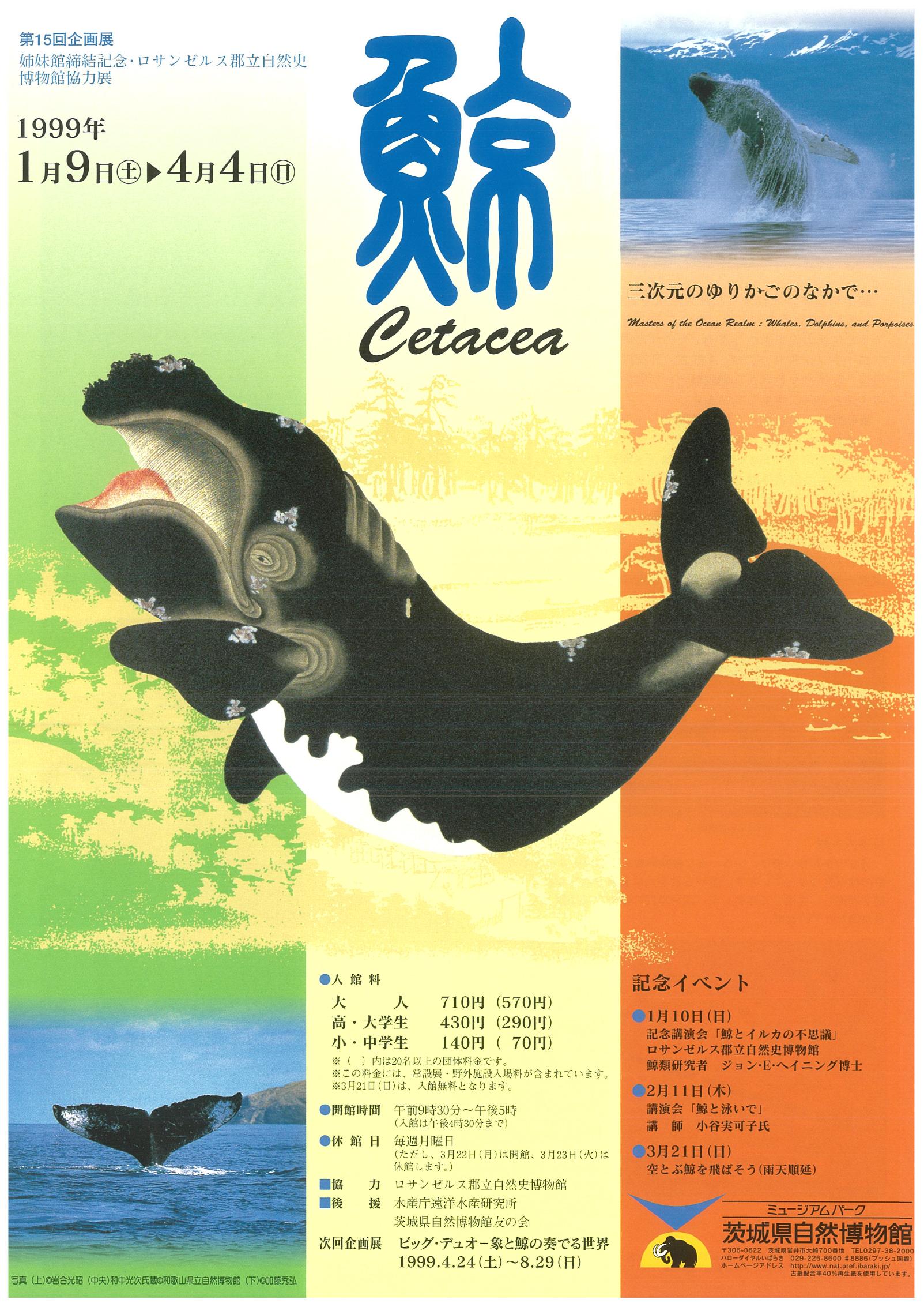 鯨 Catacea -三次元のゆりかごのなかで・・・-