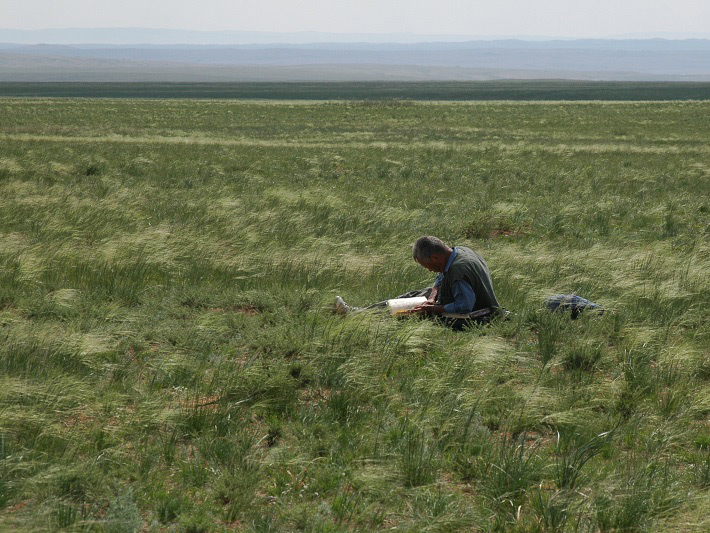 草原をつくる植物スティパ